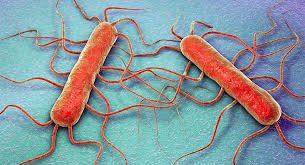 The Stigma Surrounding the bacteria Listeria Monocytogenes